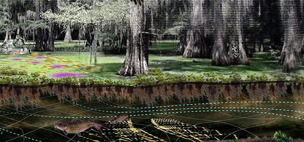 Ecolibrium Perspective WaterHyacinthHarvesting