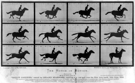 Horse Time Lapse
