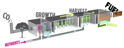 Lauren Fasic Biofuel diagram